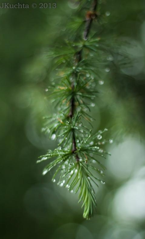 Rainrunning-3