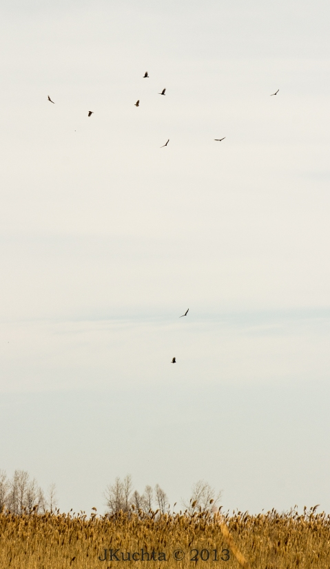 Rondeau Marshland-15