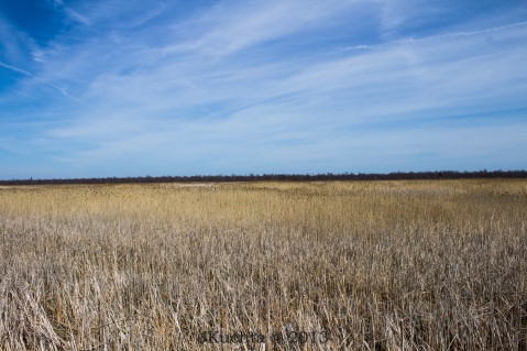 Rondeau Marshland-19