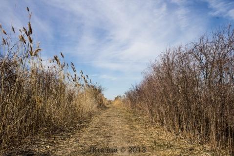 Rondeau Marshland-21