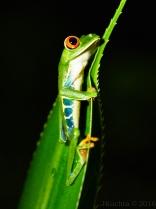 Costa Rica-49